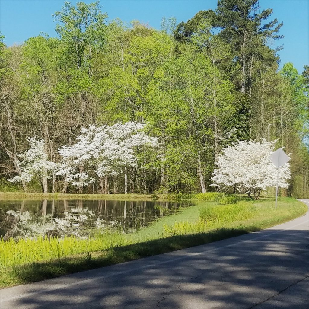 Springtime in Georgia