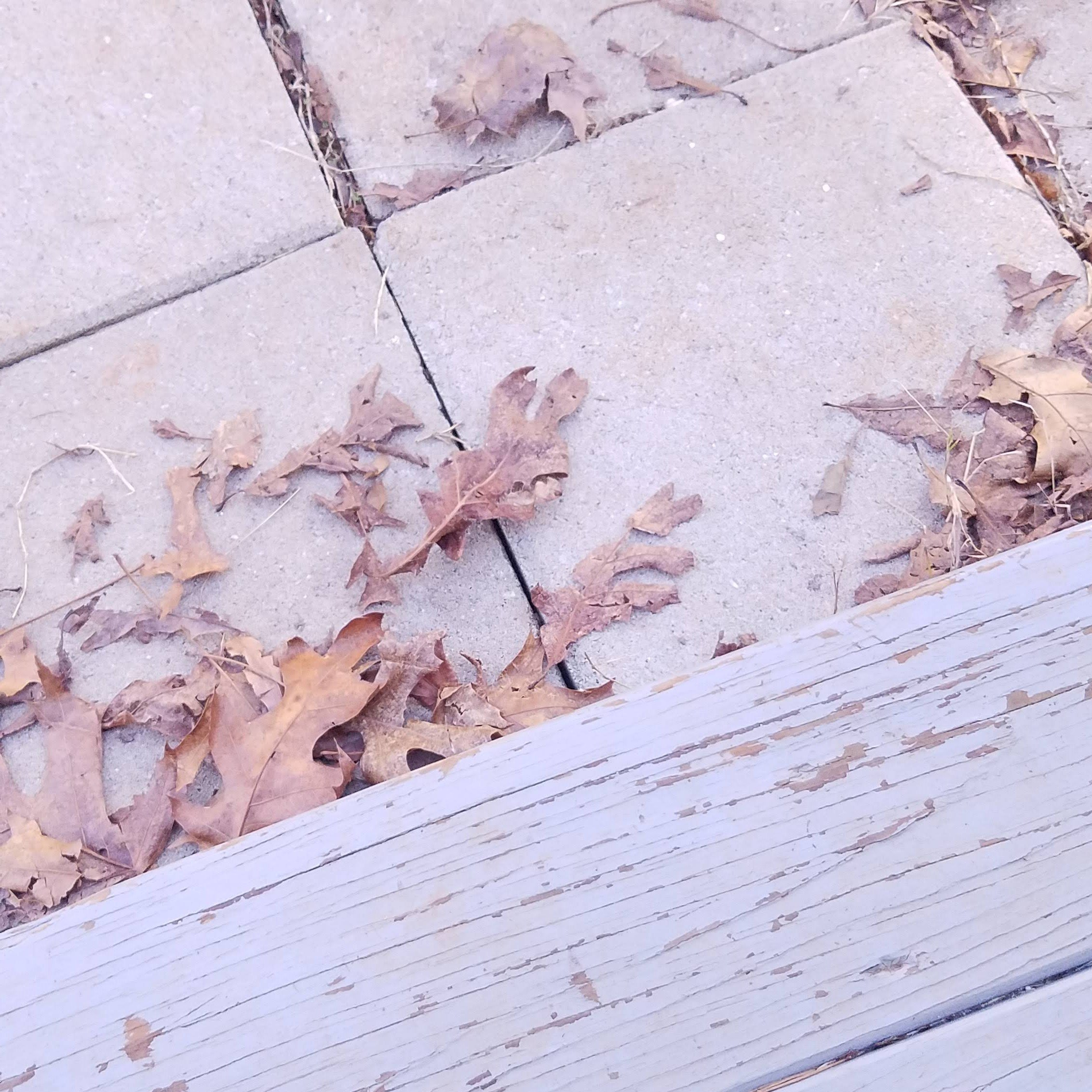 gray weathered steps leading to cement squares dusted with brown leaves