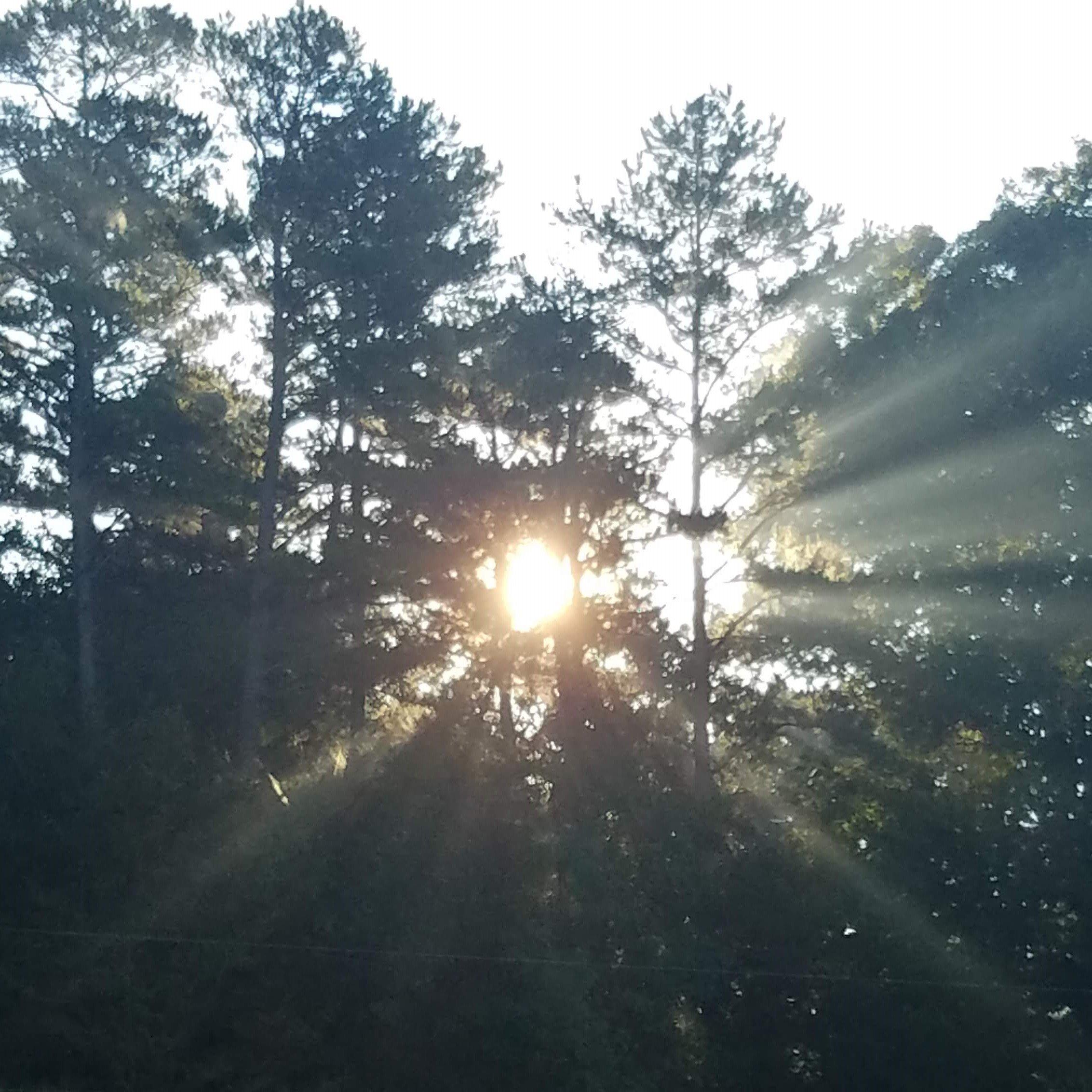 sunrise light through trees
